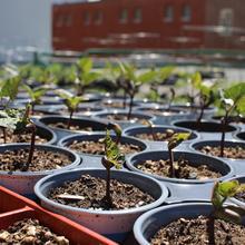 Formation – Design de votre jardin urbain et planification des semis