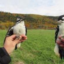 Station de baguage d'oiseaux