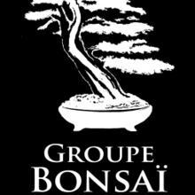 Formation sur le bonsaï