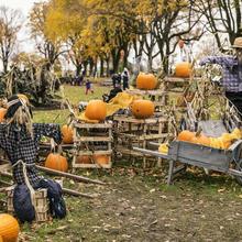 Jardin d'Halloween