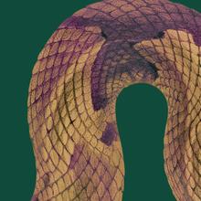 Venenum, un monde empoisonné (exposition virtuelle)