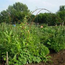 Formation en jardinage écologique