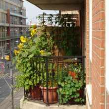Jardiner sur son balcon